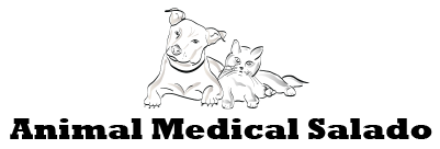 Animal Medical of Salado