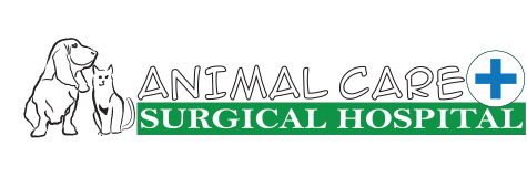 Logo for Veterinarians in Miami | Animal Care Surgical Hospital