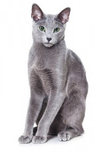 RussianBlue2of2